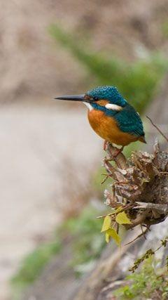 鳥の画像(プリ画像)