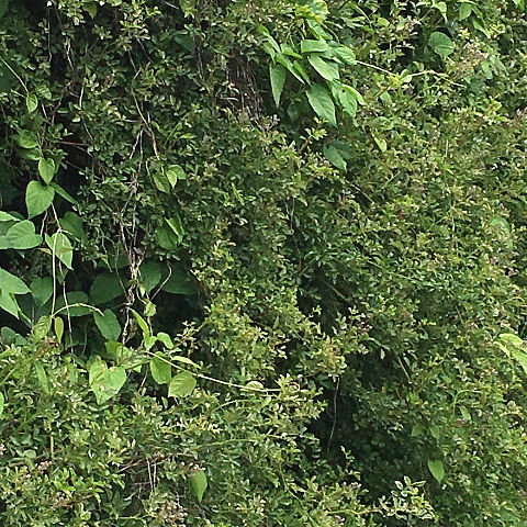 green leavesの画像(プリ画像)