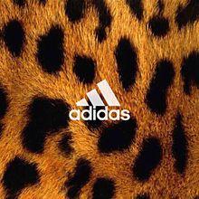 adidas 保存→いいねの画像(プリ画像)