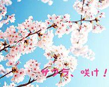 サクラ、咲け!の画像(センター試験に関連した画像)