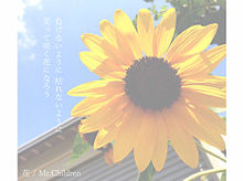 *Mr.Children 歌詞画の画像(365日 mr.children 歌詞に関連した画像)