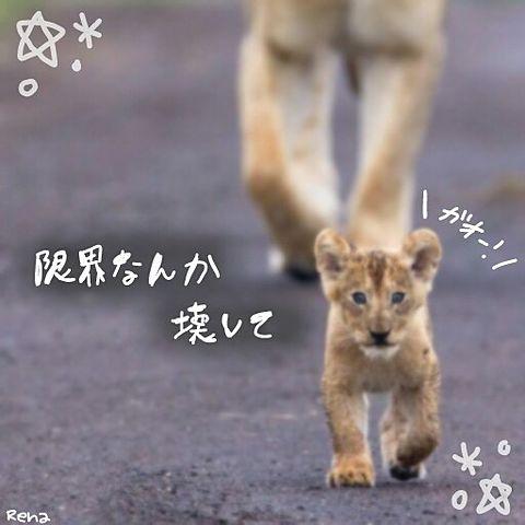宇宙に行ったライオンの画像(プリ画像)