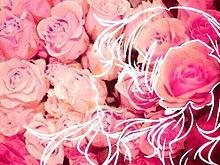 美しいバラには棘があるの画像(プリ画像)