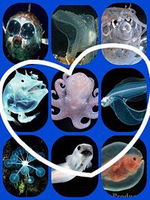 深海魚?の画像(プリ画像)