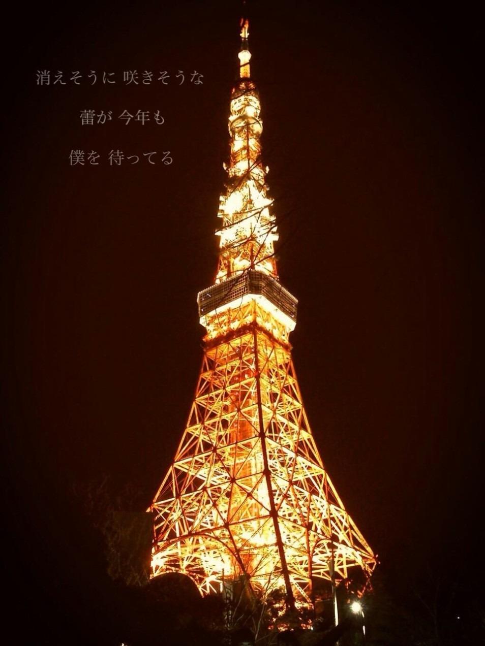 東京タワーの画像 p1_15
