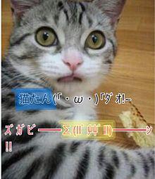 猫たん プリ画像