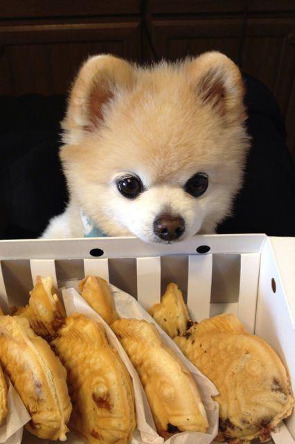 たいやきとかわいい子犬