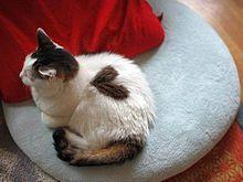 画像 可愛い 壁紙 猫