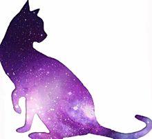 再配布禁止!宇宙柄猫第五弾!!!の画像(猫 おしゃれに関連した画像)