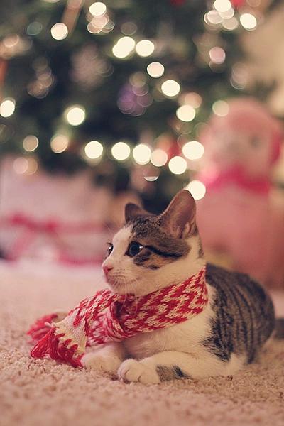 cat winterの画像(プリ画像)