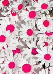 flowerの画像(プリ画像)