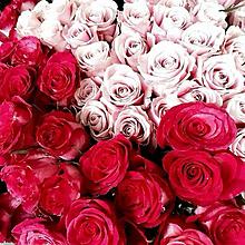 flower red pinkの画像(プリ画像)