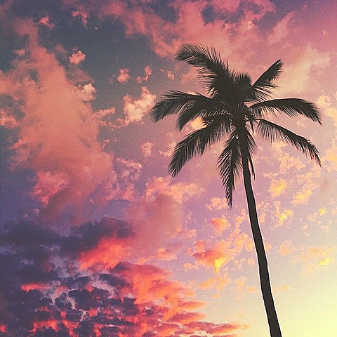 coconut treeの画像(プリ画像)