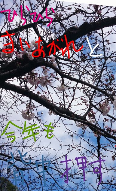 今年の桜3の画像(プリ画像)