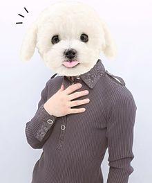 犬です。の画像(おもしろに関連した画像)