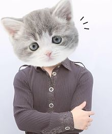猫です。の画像(おもしろに関連した画像)