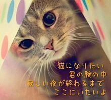 猫になりたい 歌詞画 プリ画像