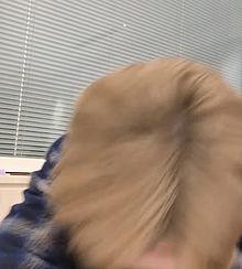 きゅるきゅる金パの画像(髪に関連した画像)