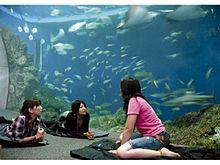 参加できるのは女子だけ!鴨川シーワールドの大水槽の前での一夜と、シャチを見ながらコース料理を頂く秋のプランの画像(コース料理に関連した画像)