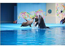 アシカとイルカが猛特訓!!2種の異なる動物が心を通わせ友情が芽生えた感動のショーが中部圏に初お目見えの画像(ライフスタイルに関連した画像)