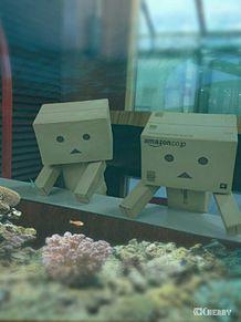ダンボー水族館に…行く?wwの画像(おもしろ 待ち受けに関連した画像)