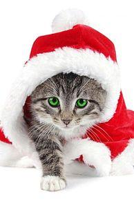 猫 サンタクロース 可愛い 背景 高画質 プリ画像