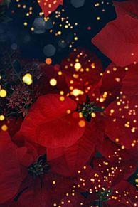 クリスマス 花 赤 背景 高画質 プリ画像