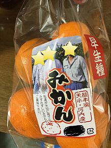 早生種 熊本県 みかんの画像(熊本に関連した画像)