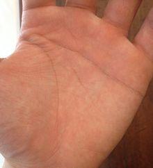 ユースケの手の画像(手相に関連した画像)