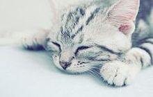 catの画像(猫 おしゃれに関連した画像)