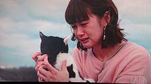 猫の画像(小西桜子に関連した画像)