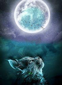 無断マイコレ🈲幻想的#ファンタジー#猫#満月#素材の画像(幻想的に関連した画像)