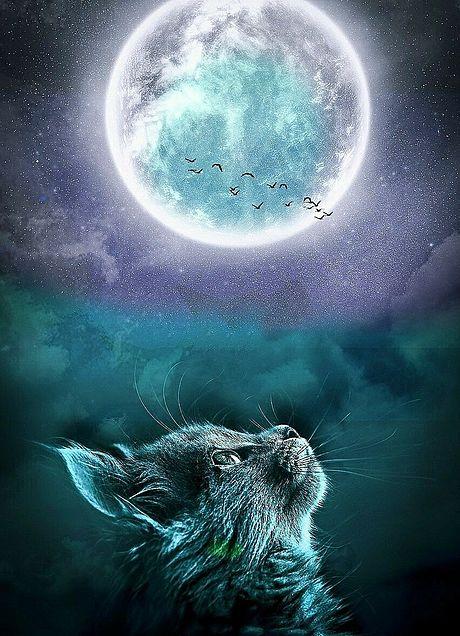 無断マイコレ🈲幻想的#ファンタジー#猫#満月#素材の画像 プリ画像