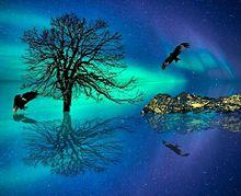 #シルエット#幻想的#風景#木#背景#素材#壁紙 プリ画像