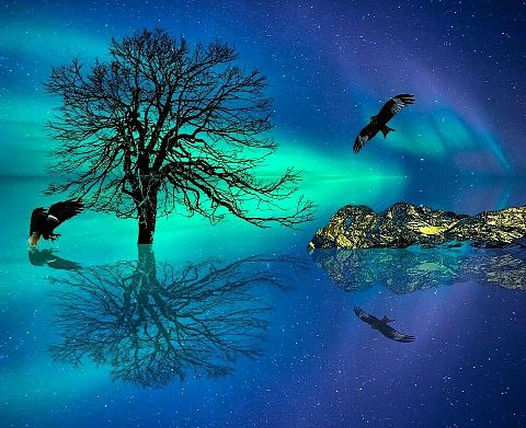 #シルエット#幻想的#風景#木#背景#素材#壁紙の画像(プリ画像)