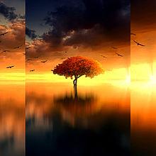 #幻想ファンタジー#幻想的#紅葉樹の画像(秋 壁紙に関連した画像)