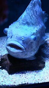 深海魚の画像(プリ画像)