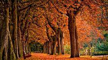 autumn プリ画像