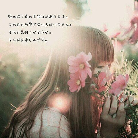 野に咲く花にも**の画像 プリ画像